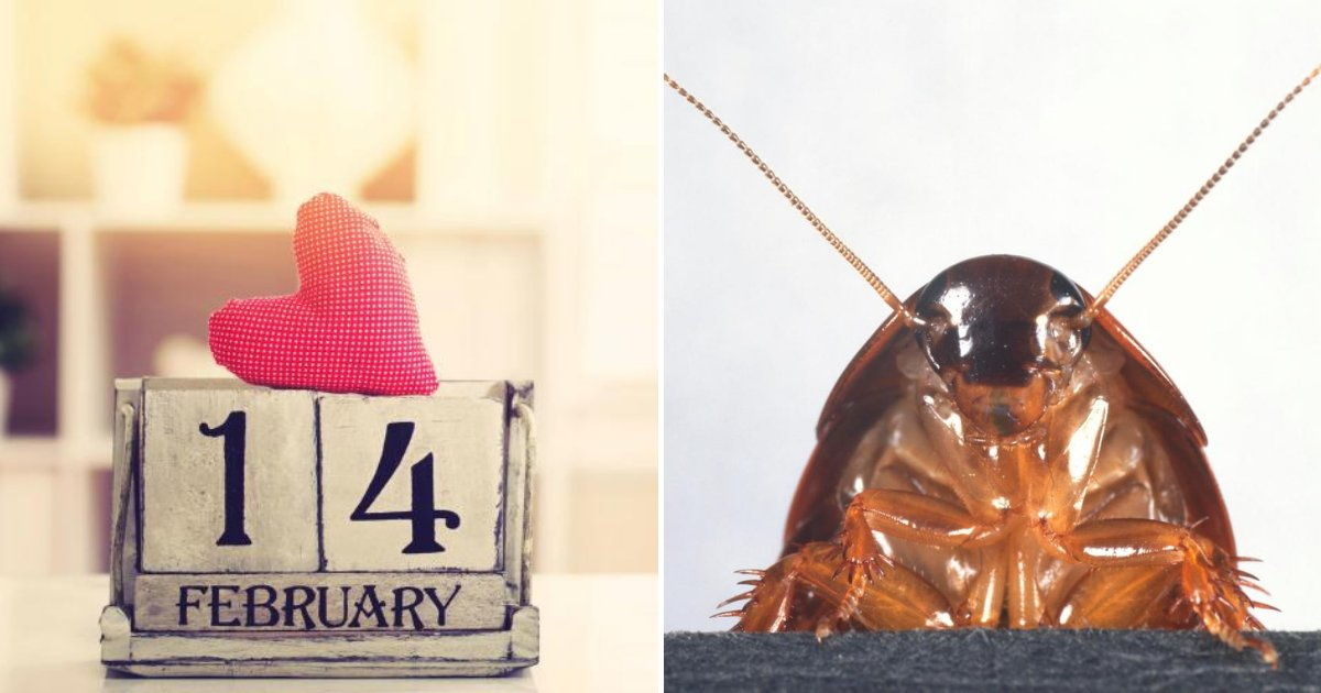 untitled design 5 6.png?resize=412,232 - Name A Cockroach After Your Ex In This Special Valentine's Day Offer!