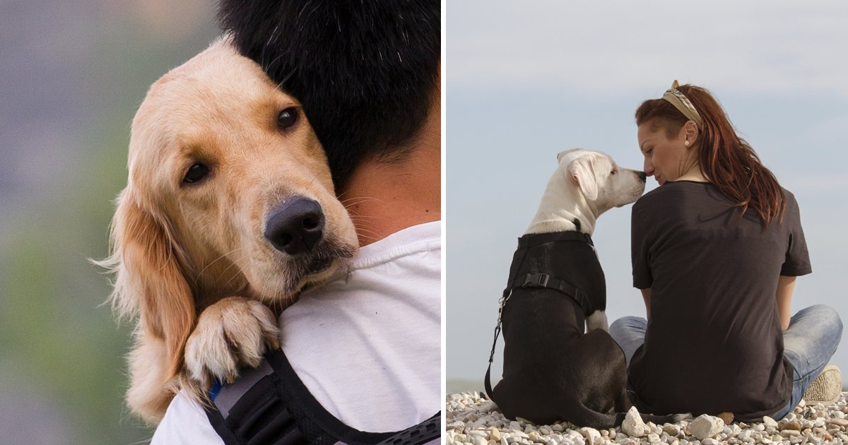1200x630 recovered 1.jpg?resize=412,232 - Vet Reveals A Heart Breaking Truth – Dying Animals Feel More Scared If Left Alone In Their Last Moments And It's Very Painful