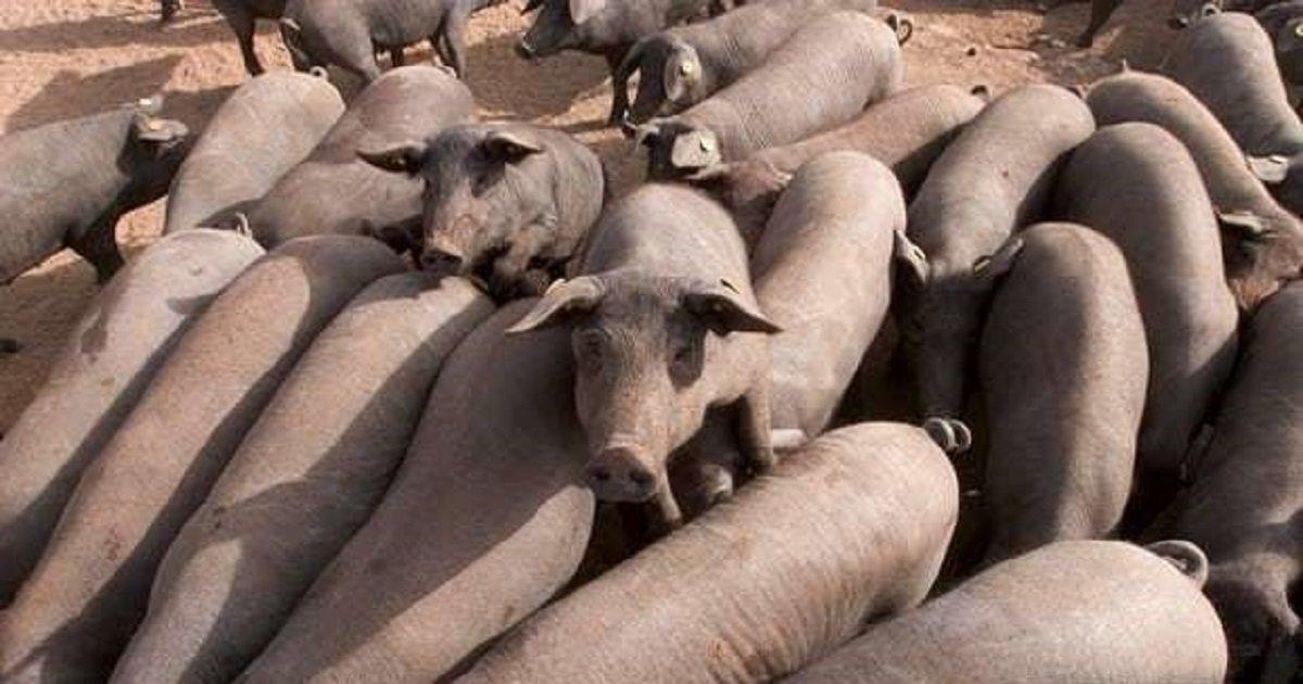 "44444 1.jpg?resize=412,232 - ""돼지가 설마?"" 러시아에서 화제인 여성의 의문사"