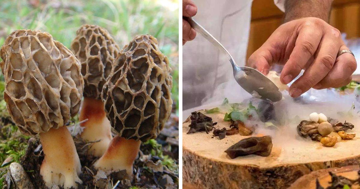 8 20.jpg?resize=412,232 - 스페인 고급 미슐랭 레스토랑에서 '독버섯' 요리 먹은 손님 사망