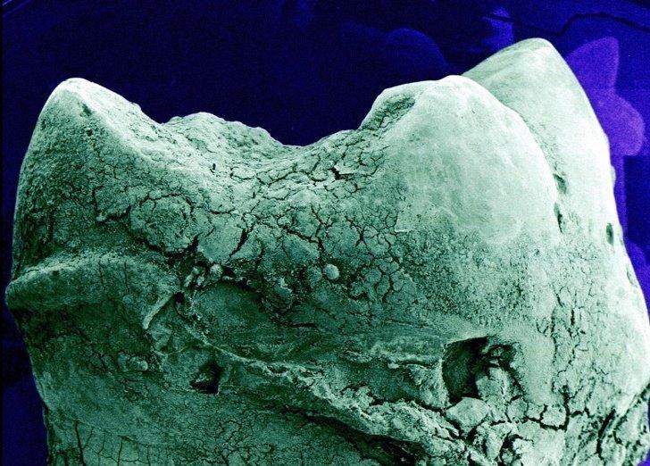 How Human Organs Look Like Under A Microscope - Small Joys