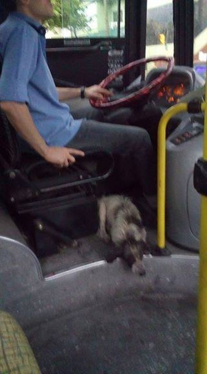 bus-dogs-2