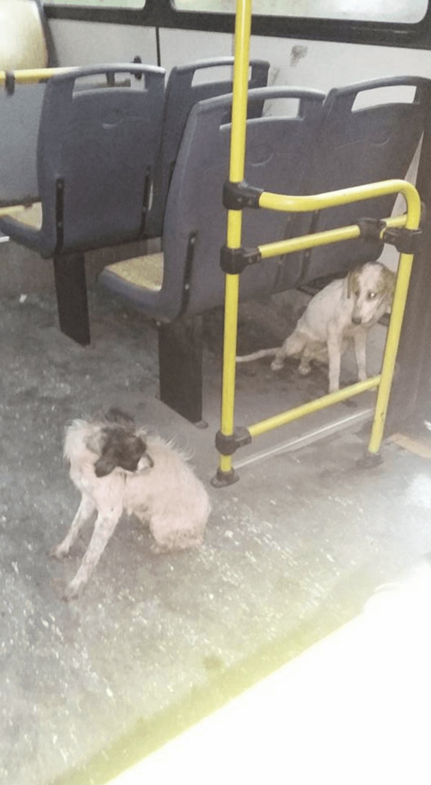 bus_driver_dogs_storm_1