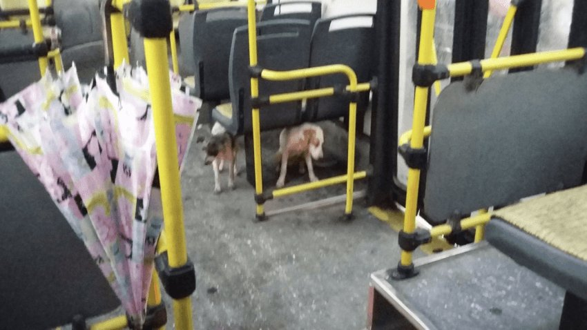 bus_driver_dogs_storm_3