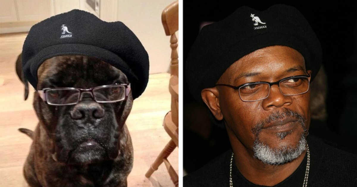 animal dopple.png?resize=1200,630 - 13 Animals Who Look Identical To Celebrities