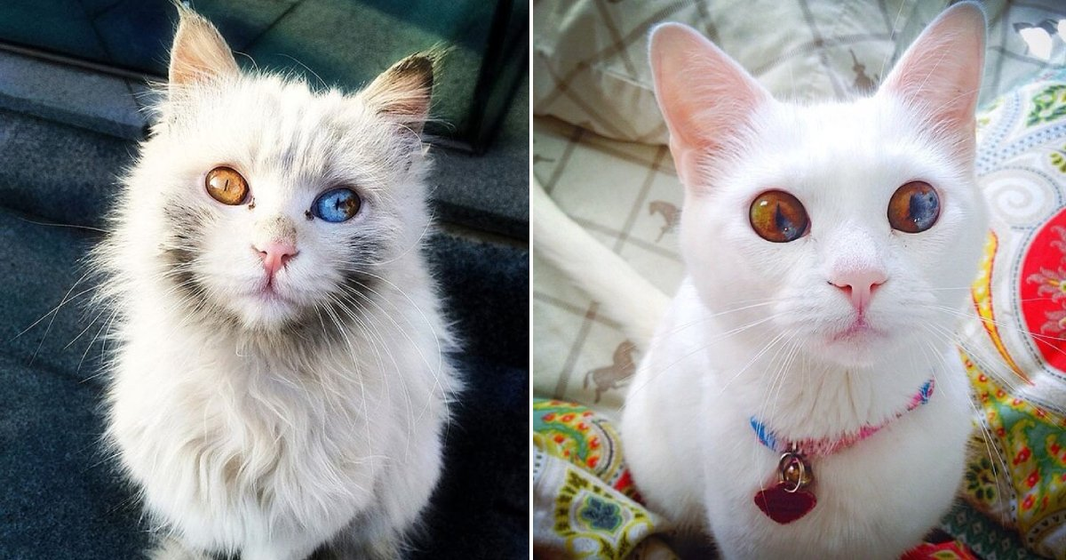beautiful cats.png?resize=1200,630 - 13 Amazing Cats That Will Entrance You With Their Beauty