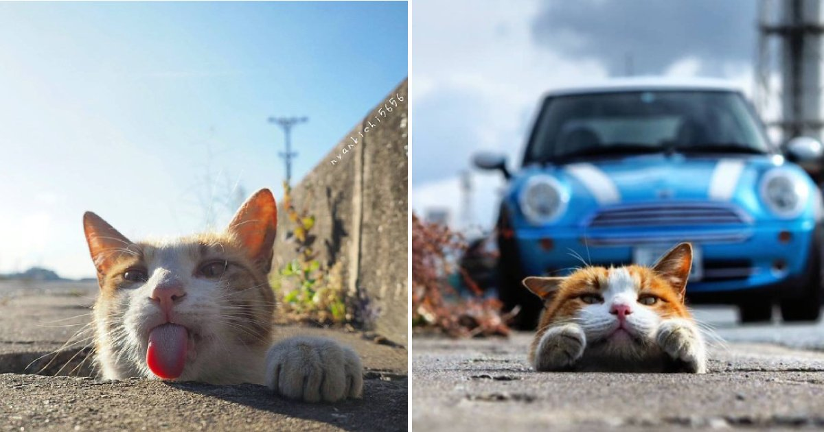cute stray cats.png?resize=412,232 - Japanese Photographer Captures The Most Adorable Stray Cats Having Fun And They Look Absolutely Satisfied With Life