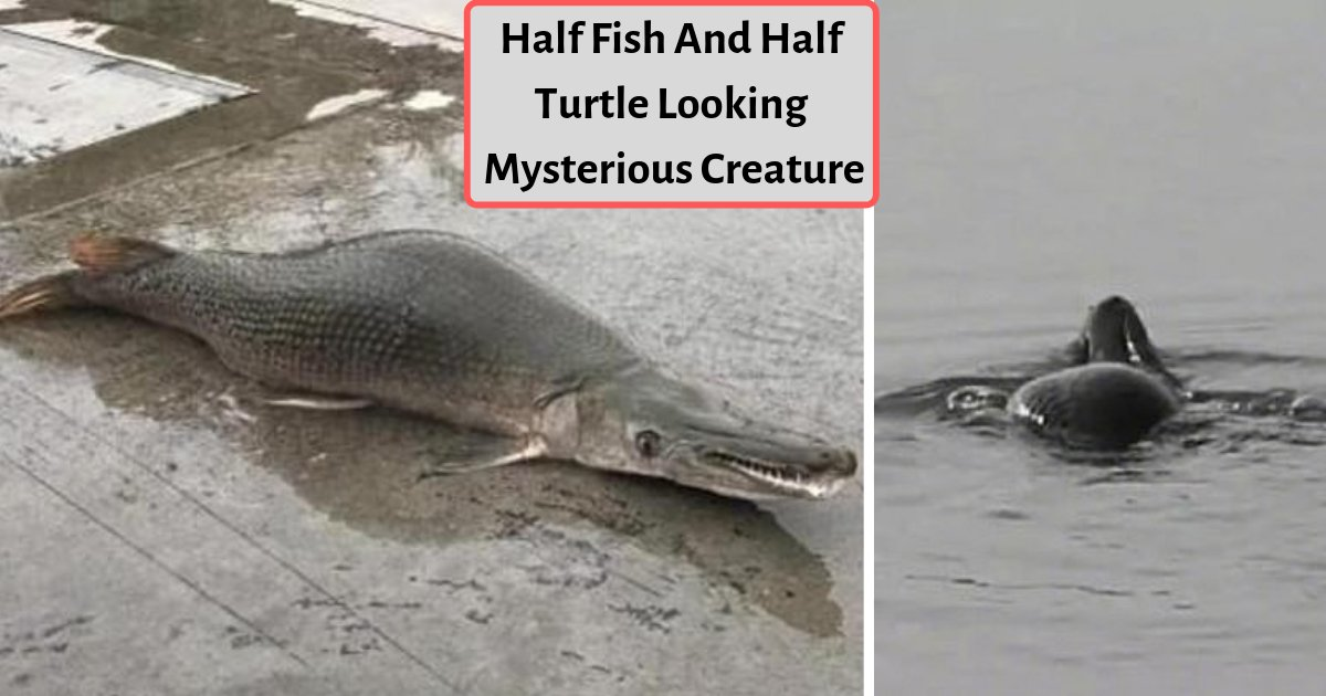 """d3 14.png?resize=412,232 - The Chinese Panicked As They Saw A Mysterious Fish Which Is """"Half-Turtle and Half Snake"""""""