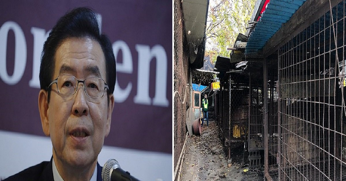 d3 2.jpg?resize=412,232 - Seoul's Mayor Vows To Shut Down All Dog Slaughterhouses As Opposition Mounts Against Canine Meat Trade