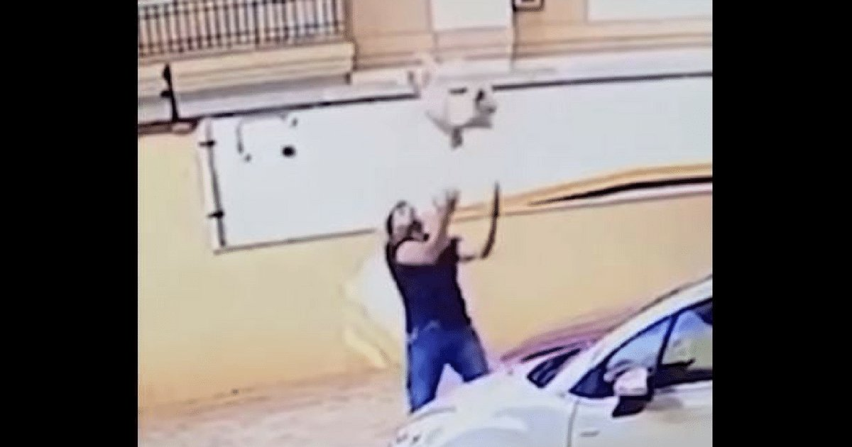 d3 5.png?resize=1200,630 - Hero Bystander Catches A Dog That Fell From Nine Stories Up Scant Moments Before It Hit The Pavement
