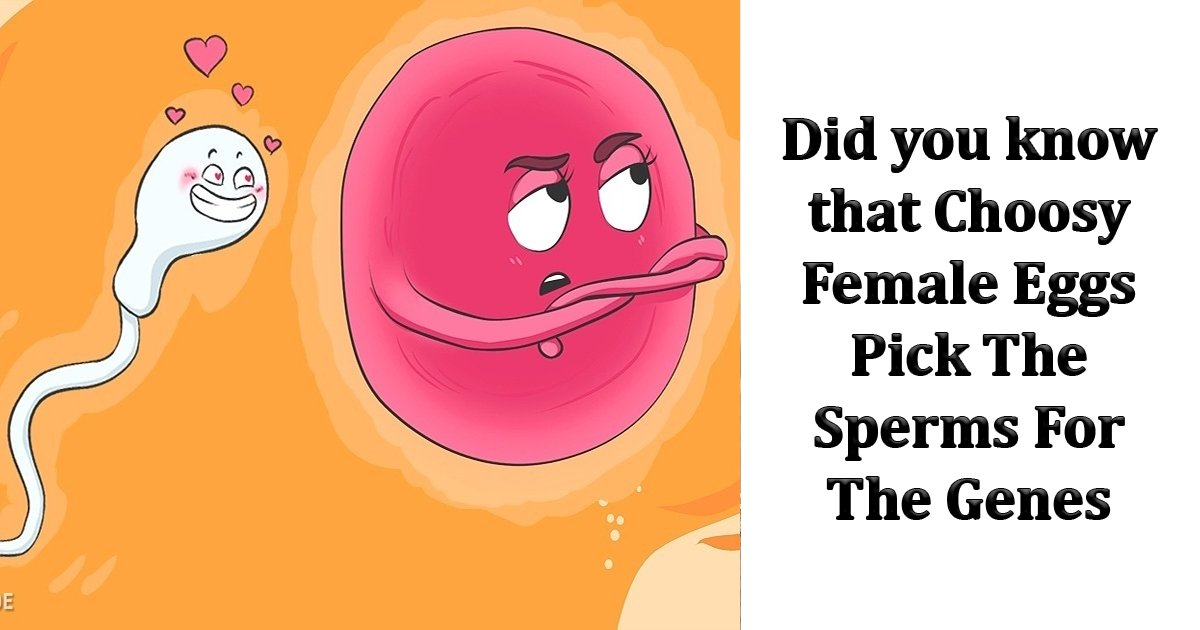 dfsfs.jpg?resize=1200,630 - A New Research Revealed That Choosy Female Eggs Pick The Sperms For The Genes, Defying The Oldest Laws of Genetics