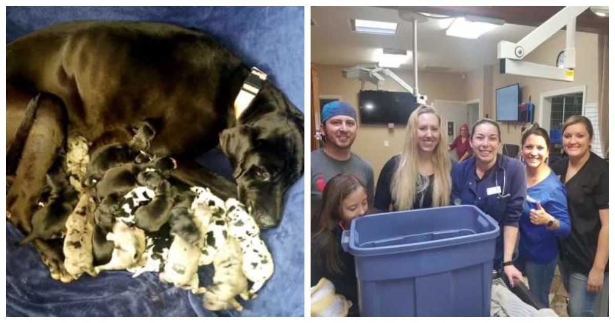 dog 3.jpg?resize=1200,630 - Arizona Great Dane Named 'Cleo' Gave Birth To 19 Babies