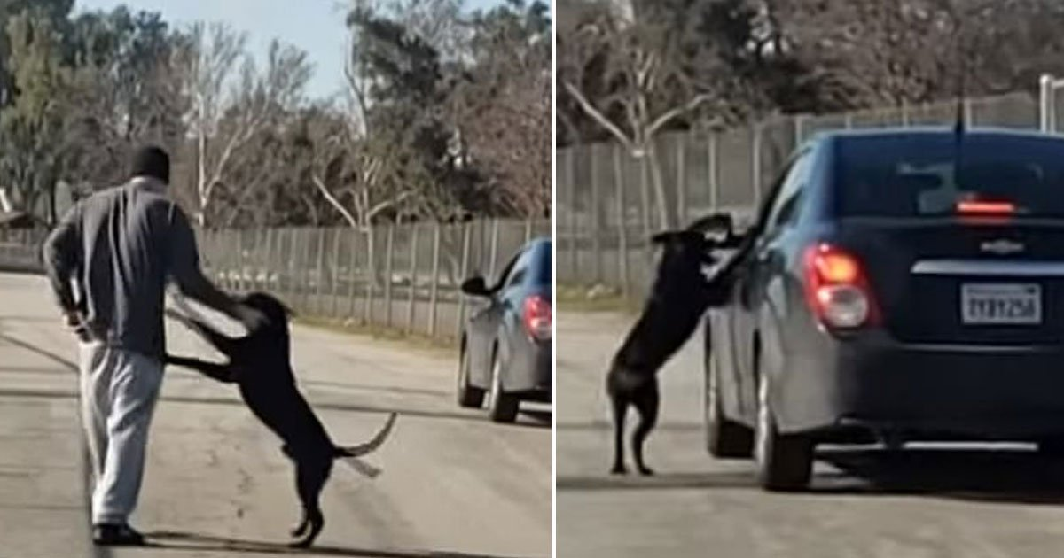 dog abandoned by owner.jpg?resize=1200,630 - Dog Chases His Owner's Car After Being Dumped At A Lake In California