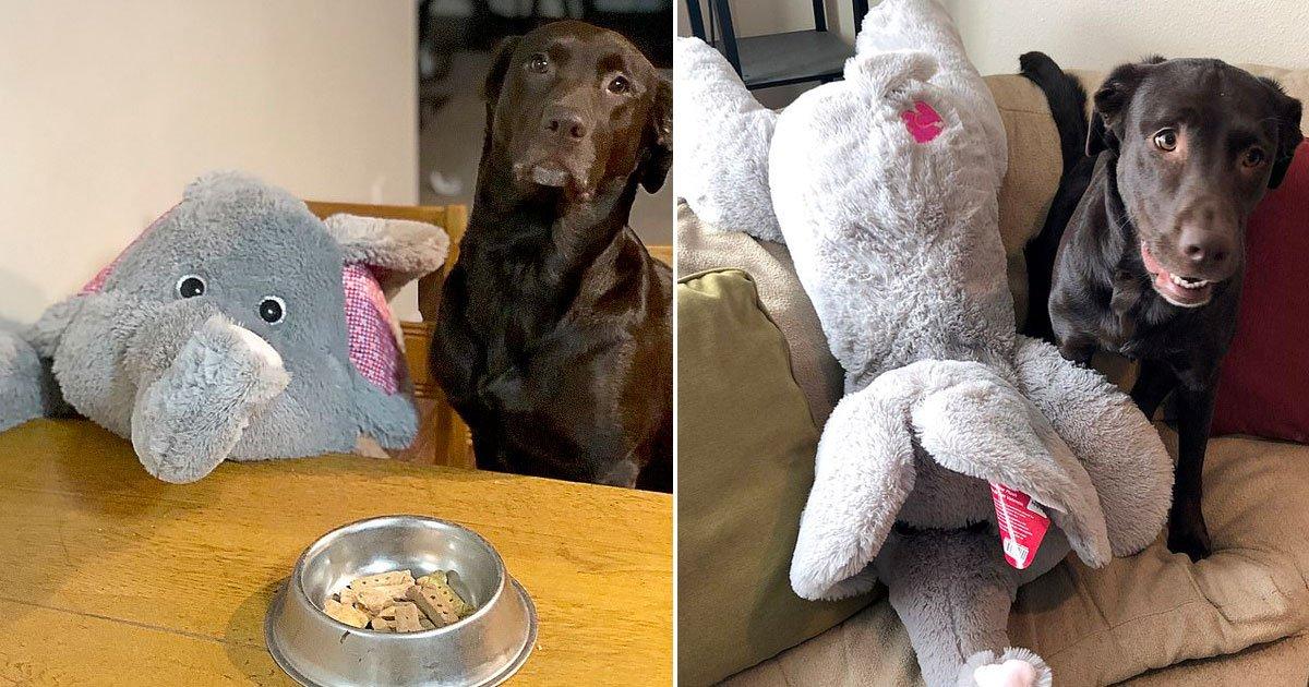 dog favourite toy elephant.jpg?resize=300,169 - Vidéo d'une chienne emmenant son jouet préféré et meilleur ami pour aller faire du shopping, car elle ne va nulle part sans lui