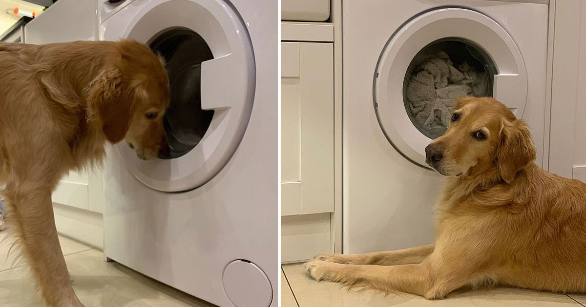 dog rescue toy.jpg?resize=412,232 - Adorable Video Shows A Dog Trying To Rescue His Favourite Toy Rabbit From The Washing Machine