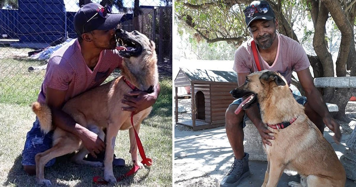 dog stabbed saving owner.jpg?resize=412,232 - Faithful Dog Saved Its Owner Who Was Attacked By A Robber