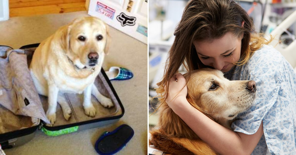dogo.png?resize=1200,630 - Husband Revealed How He Snuck Family Dog Into Hospital So She Could Say Goodbye To Wife