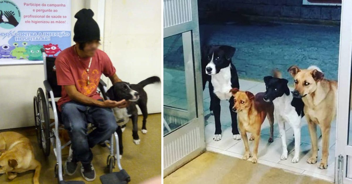 dsdfsfsf.jpg?resize=412,232 - Dogs Accompanied Owner To Hospital And Kept Waiting For Hours At The Door For Their Owner To Come Back