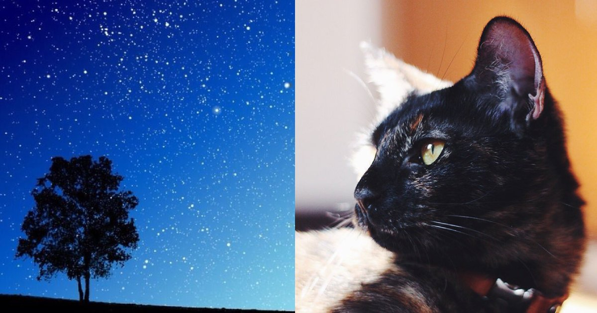 e696b0e5bbbae9a1b9e79bae 11 1.png?resize=1200,630 - 飼い主、愛猫が作ってくれた星空がまるで「プラネタリウムみたい」!!