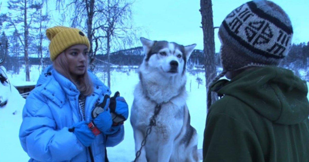 e696b0e5bbbae9a1b9e79bae 12.png?resize=1200,630 - ローラが極寒のフィンランドへ、83頭の保護犬と暮らす女性に会うために…!!