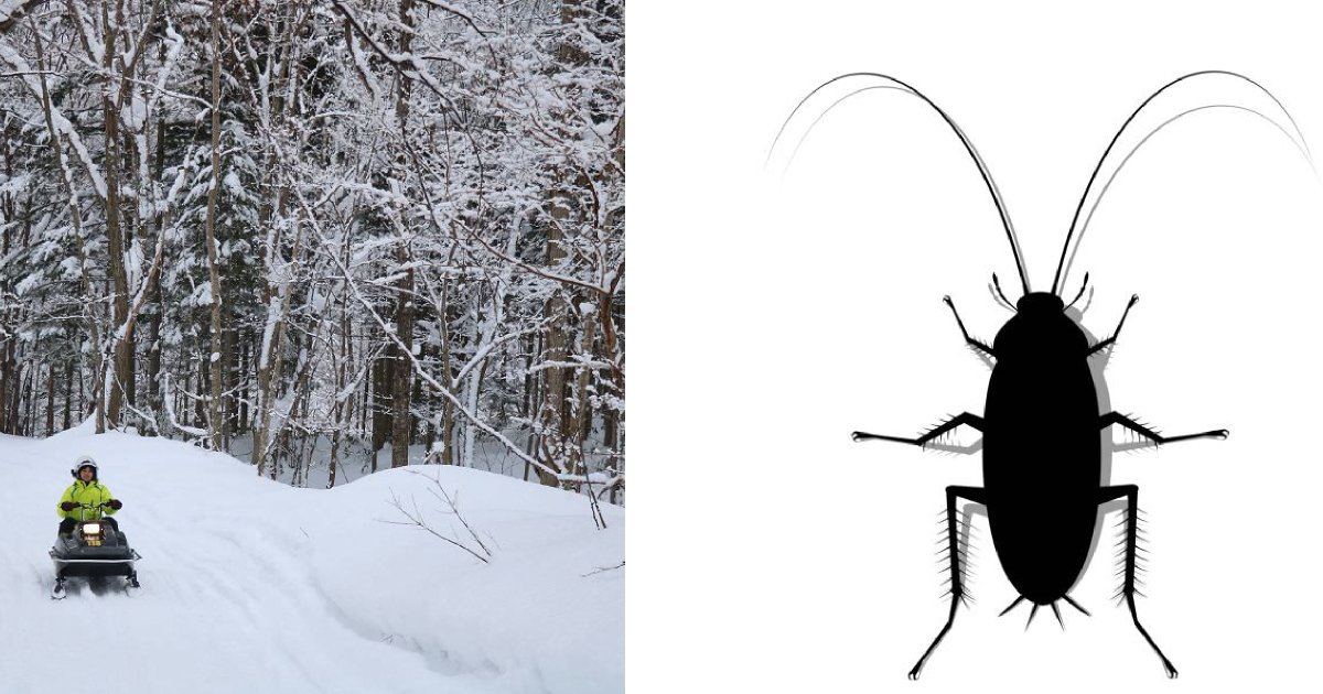 e696b0e5bbbae9a1b9e79bae 21 2.png?resize=1200,630 - 「北海道の人はゴキブリを怖がらない」!?北海道出身者に聞いたら、まさかこんな答えとは…