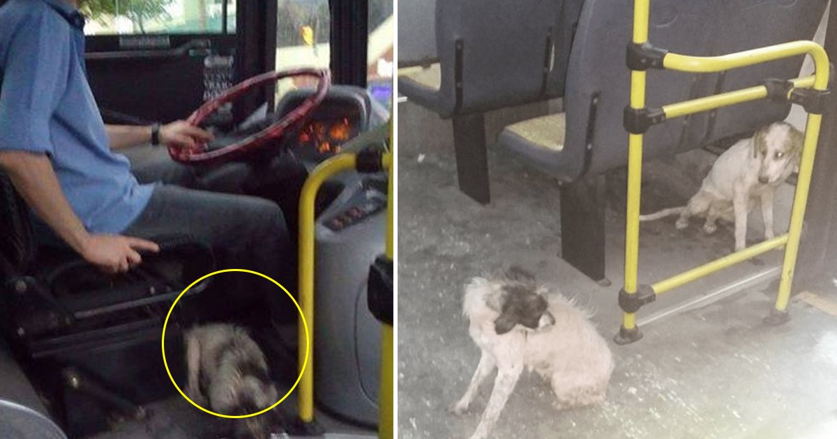 gaasdag.jpg?resize=1200,630 - Bus Driver Breaks 'No Animals' Rule And Brings Stray Dogs On The Bus During Thunderstorm And Won Millions Of Hearts
