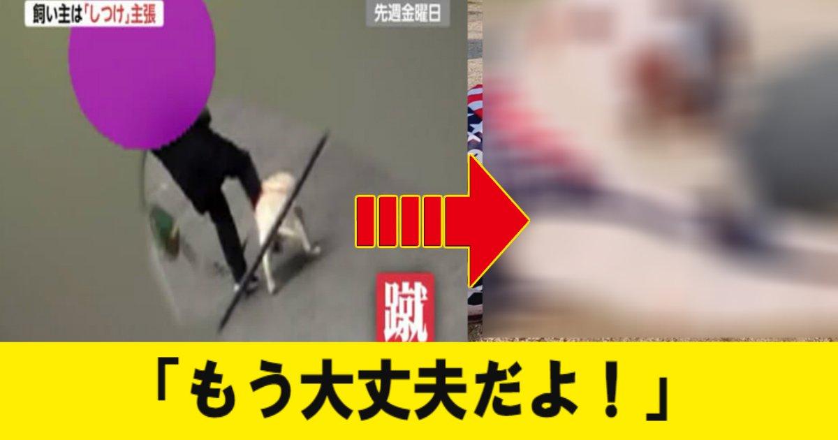 gyakutai 1.jpg?resize=1200,630 - 蹴り上げ虐〇を受けて保護された犬の現在の姿に安堵の声…!それでも飼い主は…