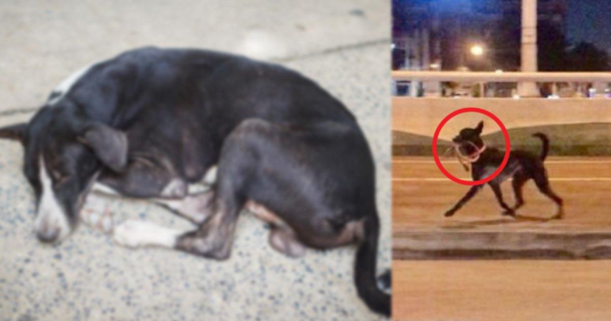 inu.jpg?resize=1200,630 - 飼い主に捨てられた犬…首輪をくわえて飼い主が乗った車を全力疾走で追いかけるも…