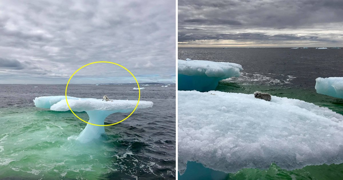 llklkl.jpg?resize=1200,630 - Fishermen Found Something Strange On A Floating Iceberg – When The Approached Closer, They Couldn't Believe What They Saw