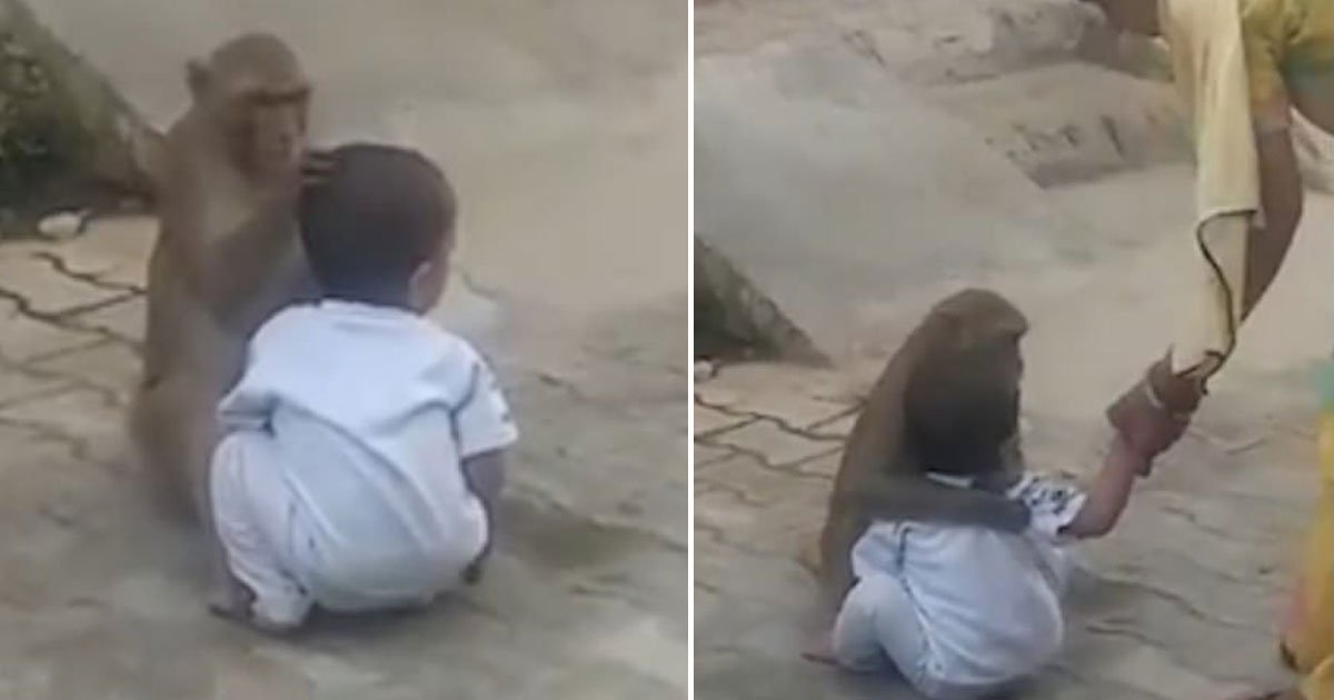 monkey kidnapped toddler.jpg?resize=412,232 - Monkey Kidnaps A Toddler And Refuses To Give Him Back As It Has No One To Play With