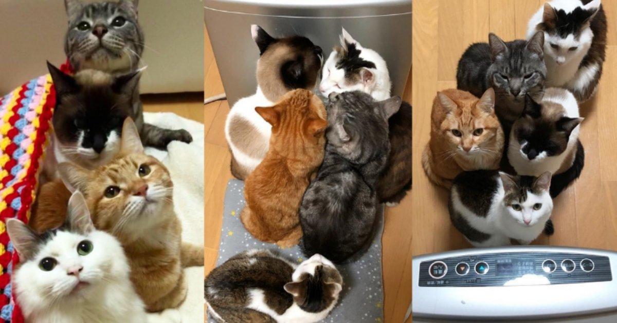 neko.png?resize=1200,630 - 史上最強の寒波で猫はこたつで丸くなる?飼い主はこたつで肩身が狭い…