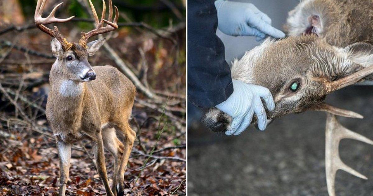 nest.png?resize=300,169 - Les experts préviennent qu'un virus mortel touchant les cerfs pourrait bientôt affecter les humains