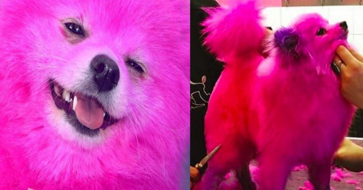 pink.png?resize=412,232 - 愛犬の毛をピンクに染めたモデルが大炎上!「2ヶ月に1回は染めてます」