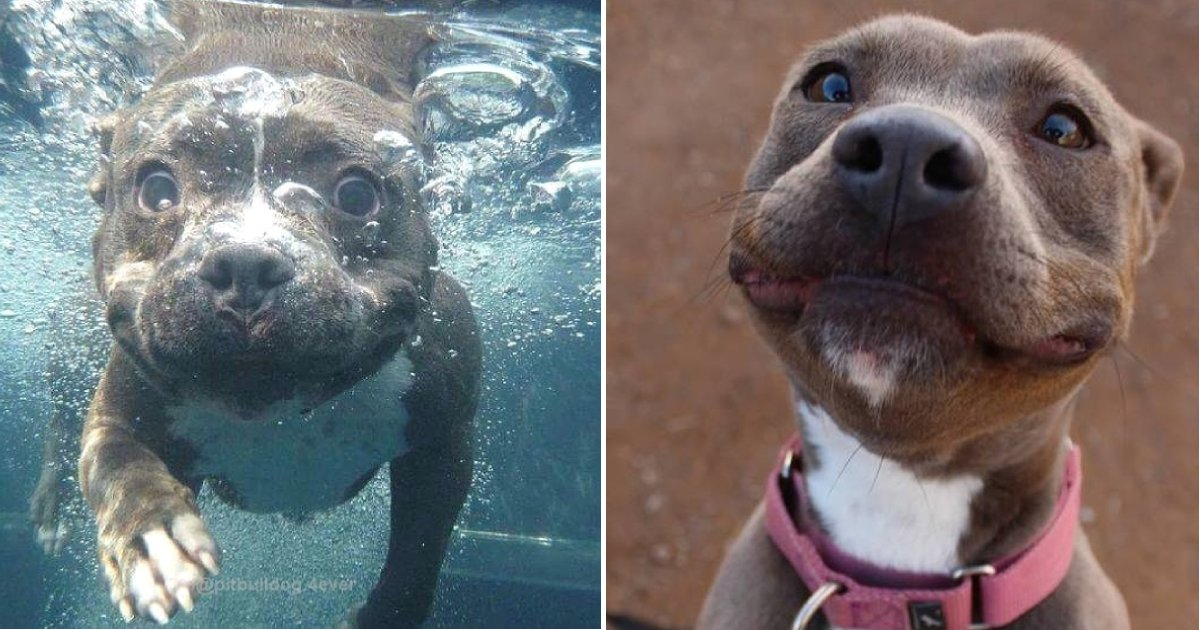 pit bulls.png?resize=1200,630 - 15 Times Pit Bulls Mercilessly Attacked Our Hearts