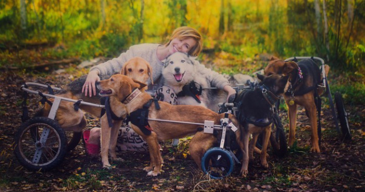 save them.png?resize=1200,630 - Famous Russian Photographer Gives Up Her Career To Live In A Forest With 100 Dogs In Need