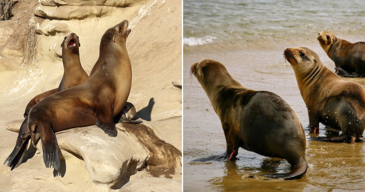 sealions5.png?resize=412,232 - A New Law Allows People With A Permit To Kill Sea Lions In These Regions