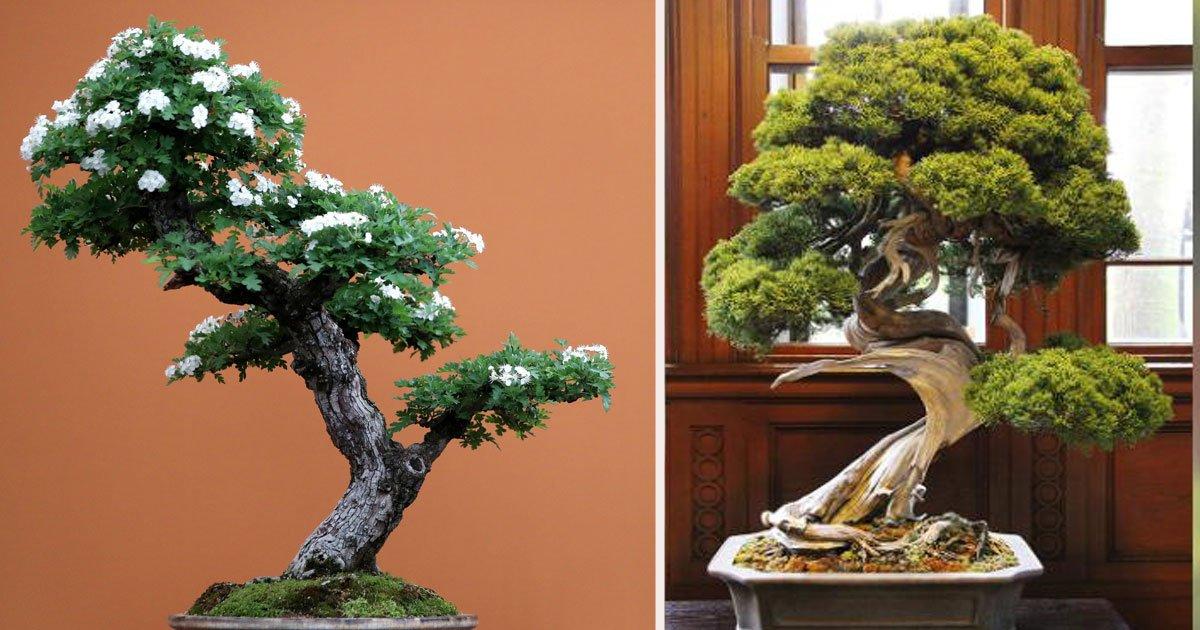 untitled 1 17.jpg?resize=412,232 - Un voleur de bonsaï dérobe pour plus de 100 000€ d'arbustes dans un jardin