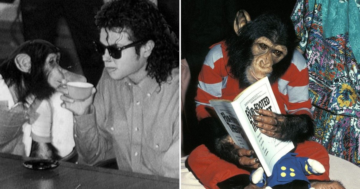 untitled design 27.png?resize=1200,630 - Insiders Revealed How Michael Jackson Was Treating His Pet Chimp Bubbles