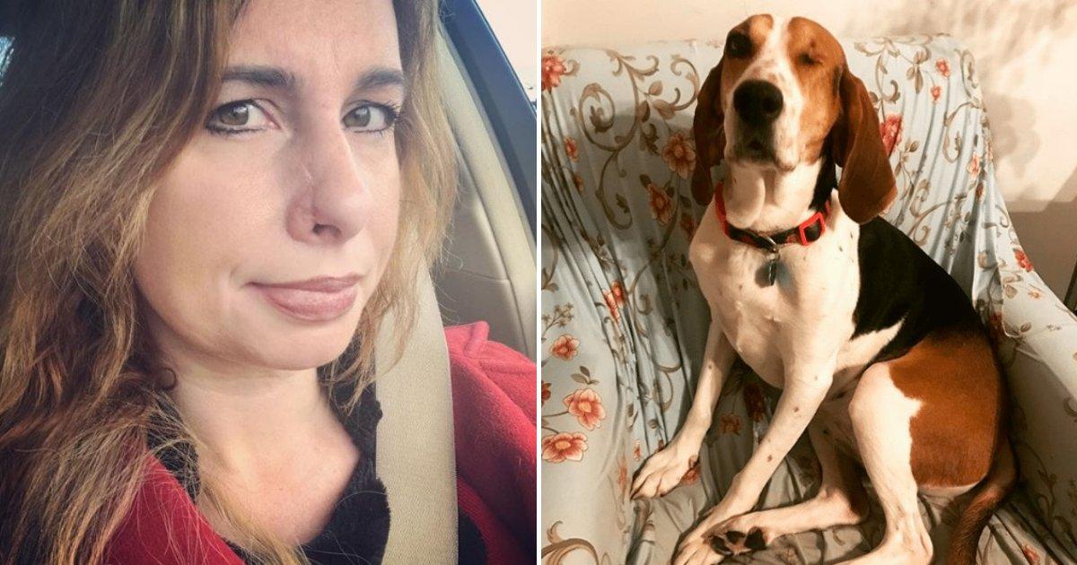 untitled design 51.png?resize=300,169 - Un chien de sauvetage sauve la vie de la fondatrice du refuge pour animaux qui l'a adoptée