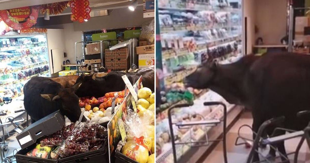 untitled design 6.png?resize=412,232 - Four Hungry Cows Rush Into A Supermarket And Begin Munching On Fruits And Vegetables