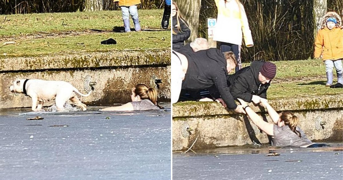untitled design 81.png?resize=1200,630 - Woman Jumps Into A Freezing Lake And Saves A Dog From Drowning