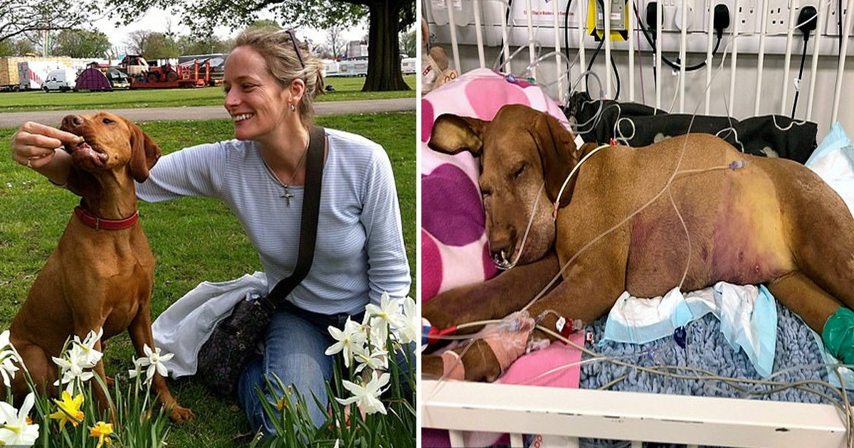 vvvvvv.jpg?resize=1200,630 - Woman Warns Others As Her Dog Passed Away Five Days After Eating Chocolate Brownies