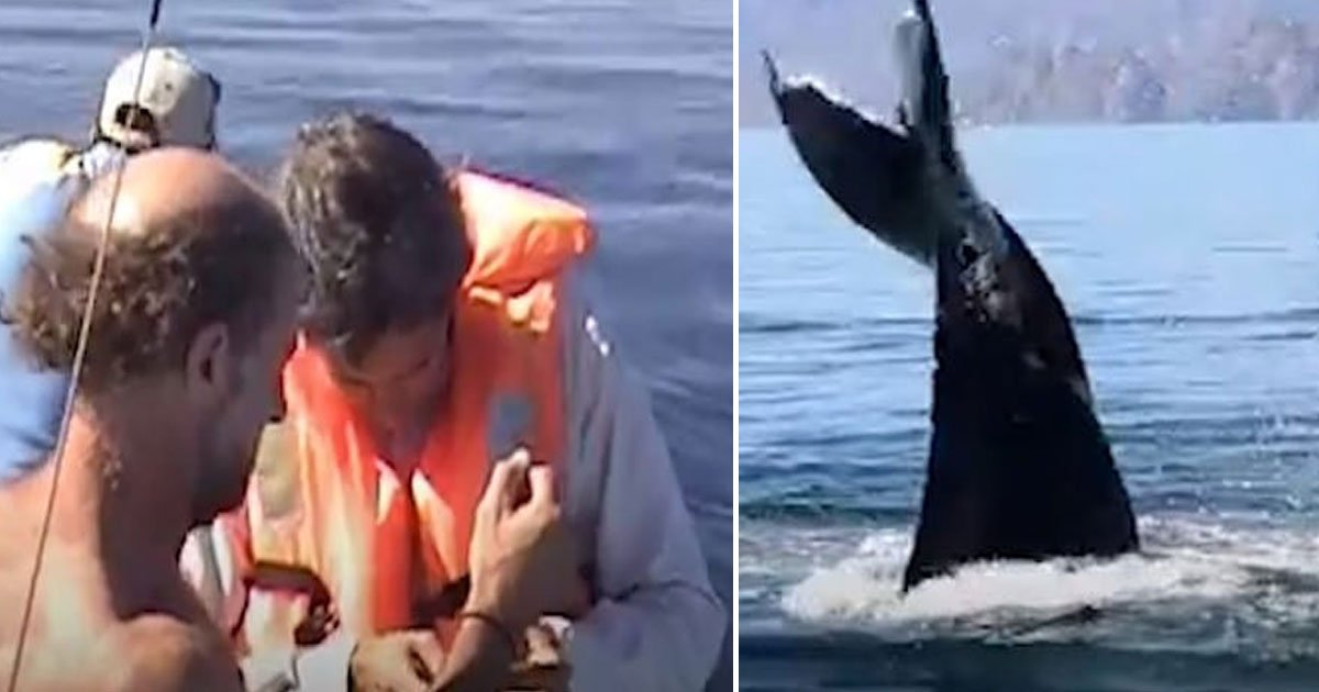 whale rescued.jpg?resize=412,232 - Giant Whale Performs A Series Of Maneuvers For Its Rescuers Who Were Out For A Sail