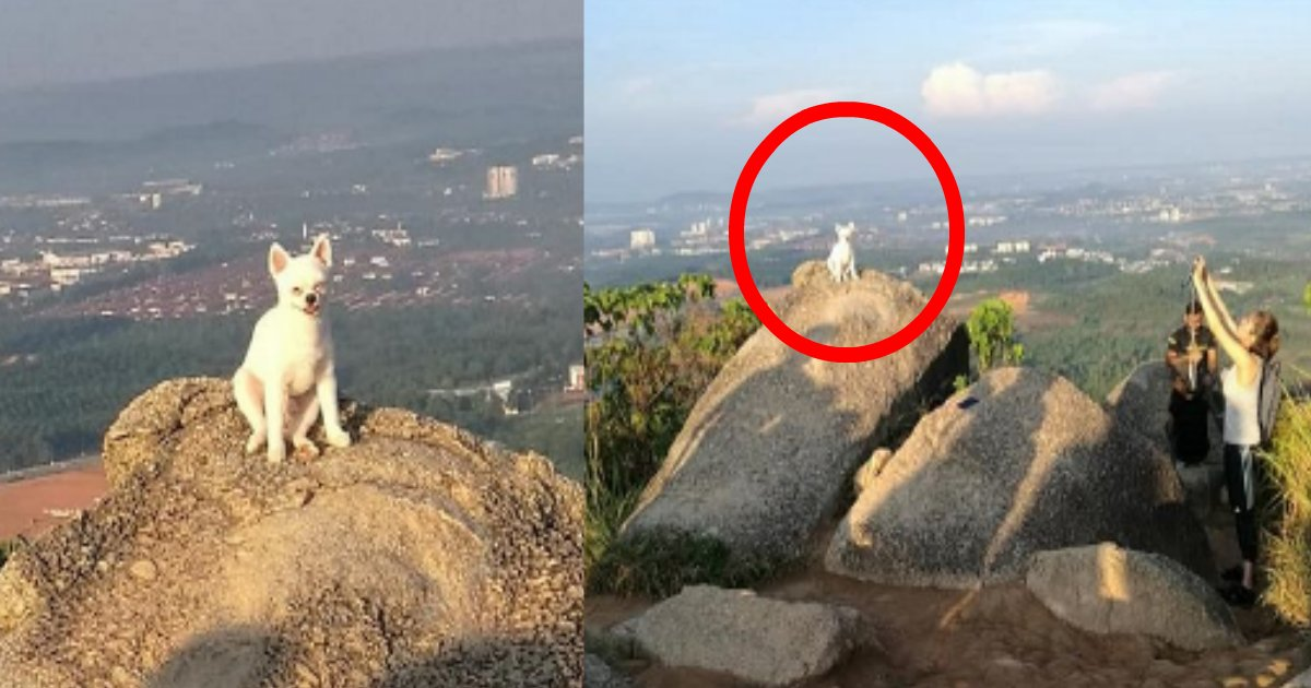 zeppeki.png?resize=1200,630 - 記念写真を撮りたいがために震える飼い犬を絶壁の頂上に立たせた飼い主が炎上!