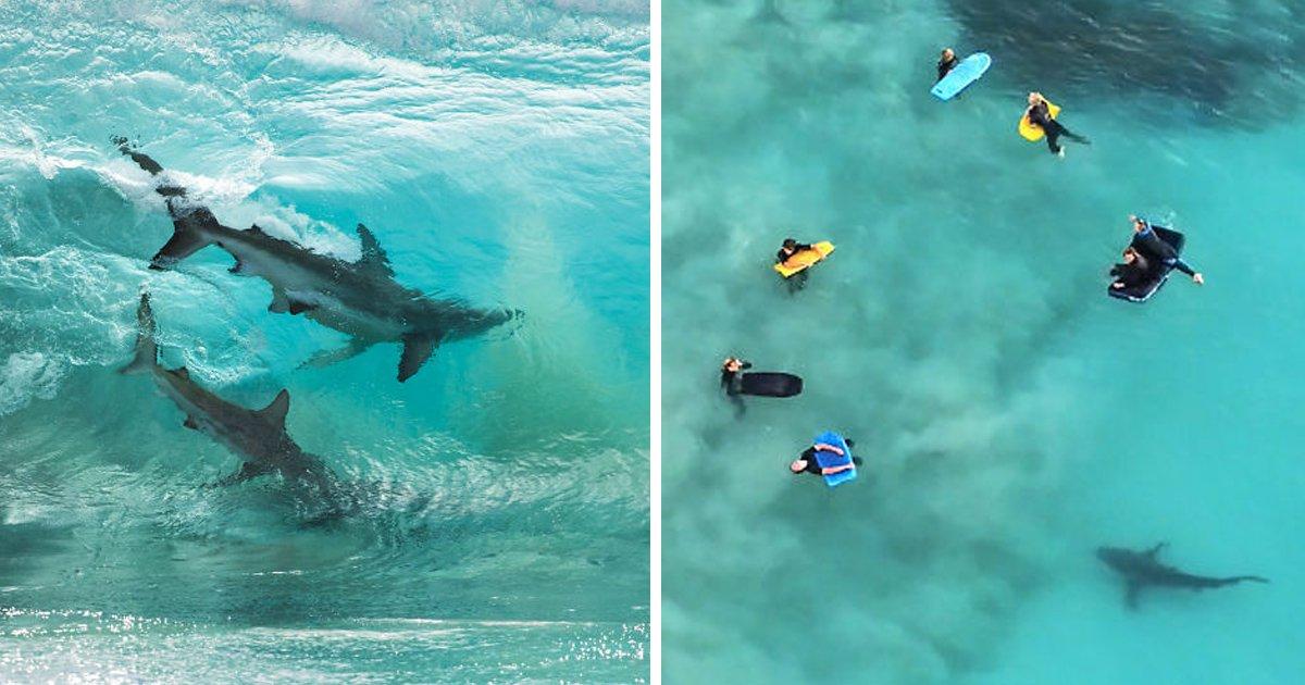 1 78.jpg?resize=412,232 - 바닷가에서 서핑하다가 200마리 '상어떼' 만난 남성.jpg