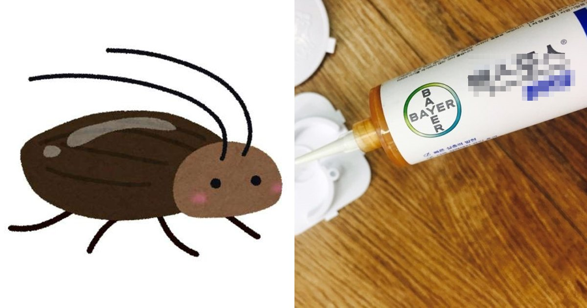 10 20.jpg?resize=412,232 - 바퀴벌레 100% 사라진다는 전설의 약.jpg