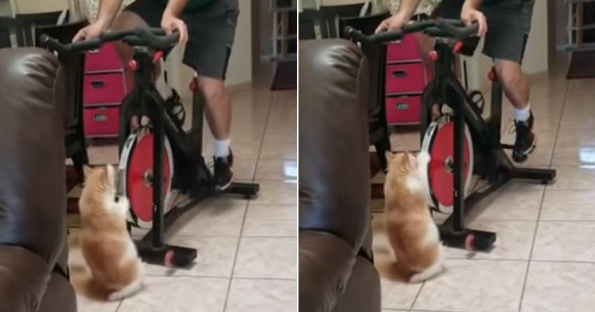 4 56.jpg?resize=412,232 - 주인 힘들까봐 열심히 자전거 굴려주는 고양이 (영상)