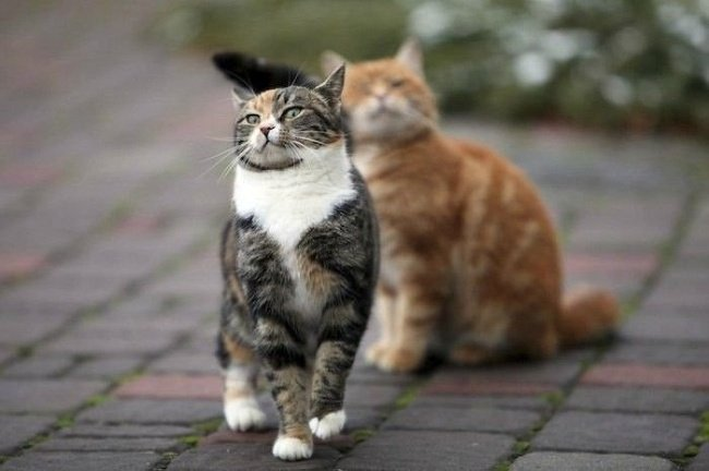 5216060 funny animal pictures of cats 1506593015 650 cd17dca712 1536567337.jpg?resize=1200,630 - 19 Emotional Animals That Are So Adorable They Deserve to Win an Oscar