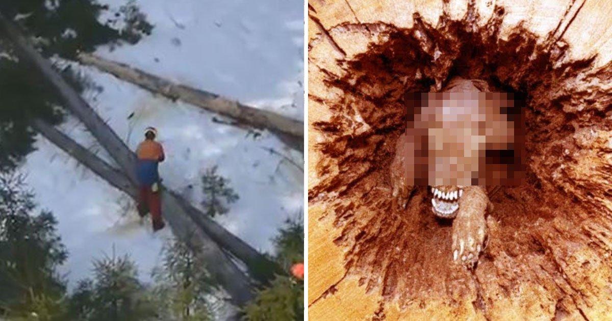 6 9 1.jpg?resize=412,232 - 벌목꾼들이 나무 베기 전까지 '20년' 동안 갇혀 있었던 강아지 (영상)