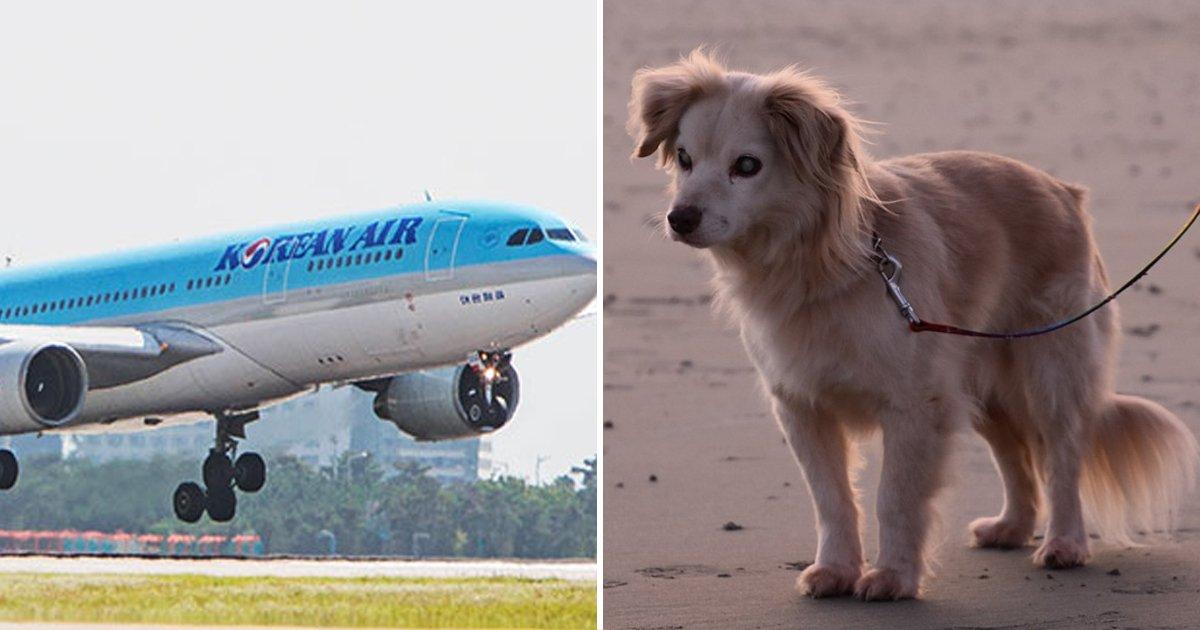 7 45.jpg?resize=412,232 - 이제 반려동물 데리고 공항갔을때 '무료'로 이용할 수 있는 서비스